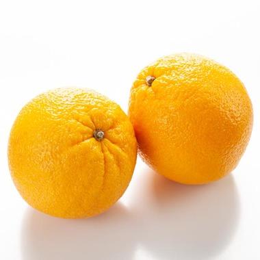 Orange Italian Soda Syrup (Sugar Free, Powdered)