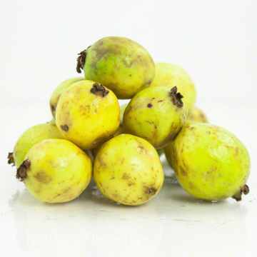 Guava Syrup, Organic